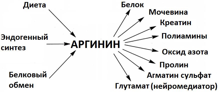Аминокислота аргинин