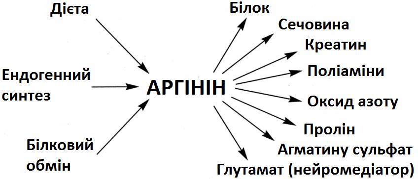 Амінокислота аргінін